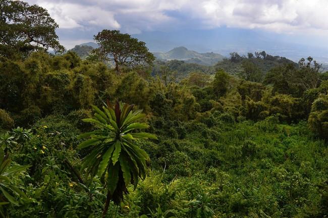 Ruanda Parque Nacional de los Volcanes