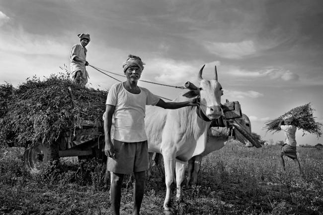Agricultores de Kallithanda