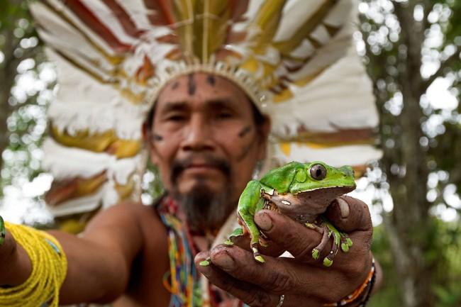 Pajé Aracá (chamán) con las ranas para elaborar medicina de Kambó